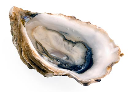 Oysters are a Best Food for Brain Health